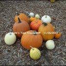 *Pumpkins* 8X10 Color Photo