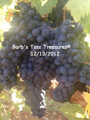 *Grapes Galore* 8X10 Color Photo