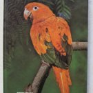 Conures by Tony Silva and Barbara Kotlar Hard cover book 0876668937 bird parot B