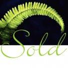 GO GREEN  MACRAME PLANT HANGER W/BLUE BEADS