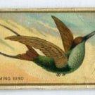 HUMMINGBIRD 1910 Bird Series T42 Tobacco Card
