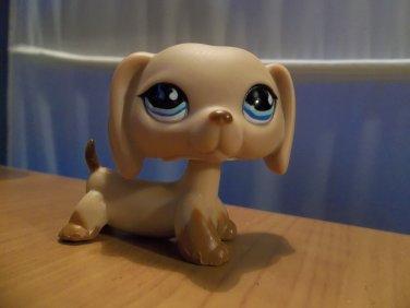 Littlest Pet Shop dachshund # 518 tan blue eyes