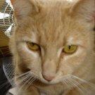 Orange Cat Print - AAoc