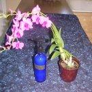 Essential Oil Body Lotion - DPeol