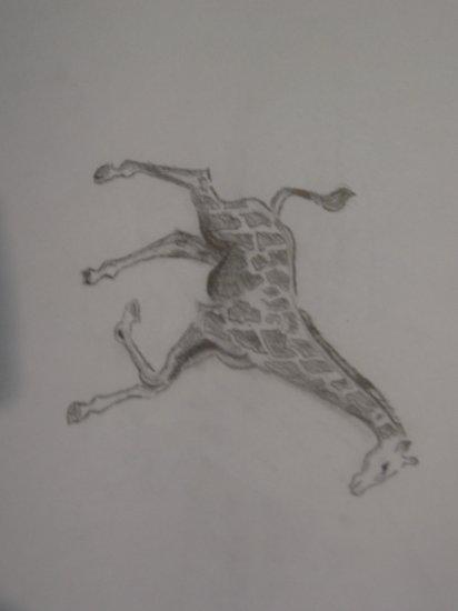 Giraffe - KFgi