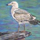 Seagull Print - NWsp