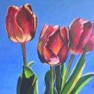 Three Tulips Print - NWttp