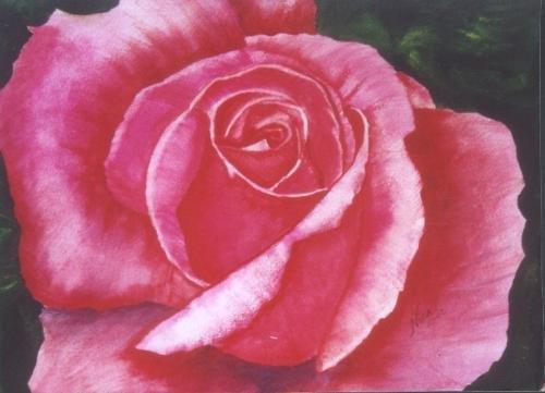 Pink Rose Print - NWprp