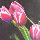 Swaying Tulips Print - NWstp