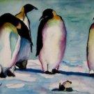 Penguin Tantrum - NWpt