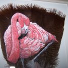 Flamingo Framed Feather Art - OWfl
