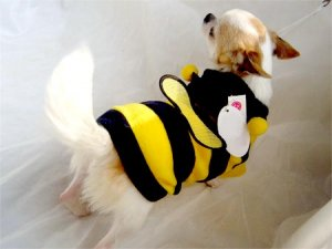 Honey Bee Hoodie Costume  ~XXS~