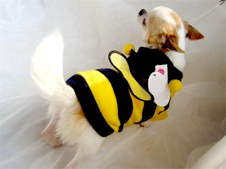 Honey Bee Hoodie Costume ~XS~