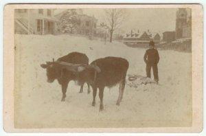 Man Using Ox to Plow Snow