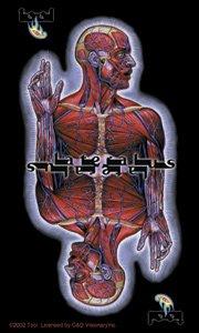 Tool Vinyl Sticker Skinless Logo