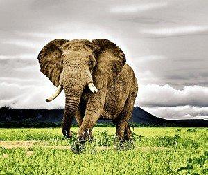 Elephant Queen Size Blanket