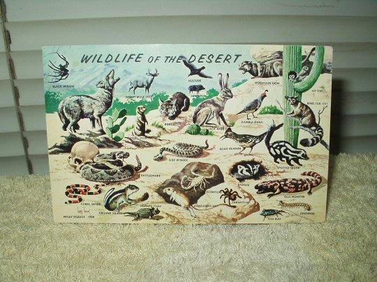 vintage wildlife of the desert postcard unused year 1958