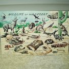 vintage wildlife of the desert postcard unused year 1958