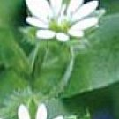 Chickweed--4 Ounces