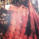 US 1 Cent S&H Vintage Crochet Pattern Autumn Leaves Afghan Lap Robe Bedspread