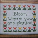 Designs for the Needle Cross Stitch Craft Kit Bloom Where Planted Easy Beginner