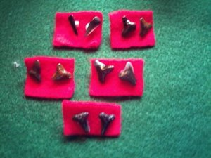 Item 016 Sharks tooth earrings
