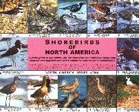 Shorebirds of North America