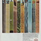 "1965 Full Service Bank Ad ""Take a long, long look"""