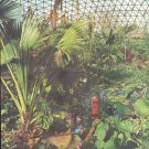 "1961 Climatron Article ""Midwestern Jungle"""