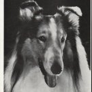 1964 The saga of Lassie Article ~ by Vernon Scott