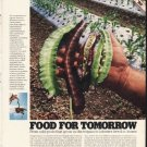 """1980 Food For Tomorrow Article """"odd pods"""""""