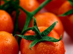 Tomato Leaf (soy wax tarts)