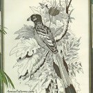 Tropical Bird Embroidery Kit Vintage Paragon Black Nature Etching Stamped Linen 12 x 18