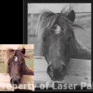 Customized Laser Pet Portraits