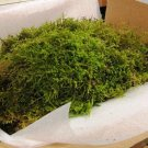 NATURAL MOSS FOR DECORATING