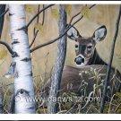 Whitetail Deer (Tranquil Response) Print