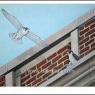 Peregrine Falcons Print