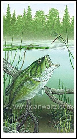 Largemouth Bass Attack Print