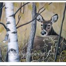 Whitetail deer (Tranquil Response) Original
