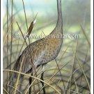 Sandhill Crane Print