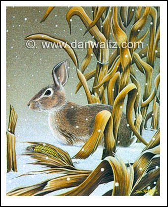 Cottontail Rabbit Original