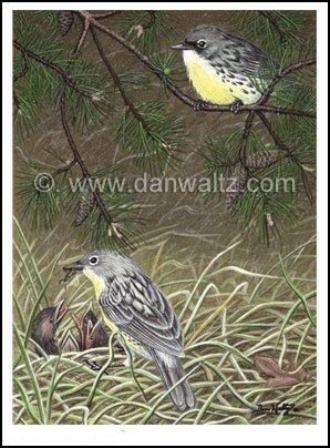 Kirtland Warblers Original