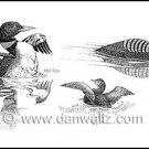 Common Loons Illustration Print