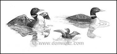 Common Loons Illustration Print