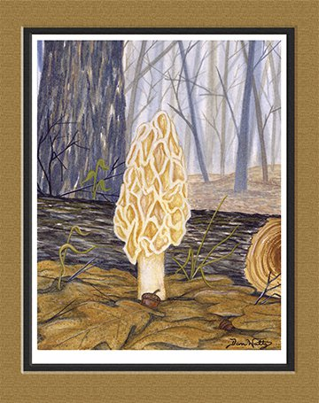 Morel Mushroom Print