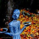 Balance of Leaves - 8x10 - Original Fine Art Photograph