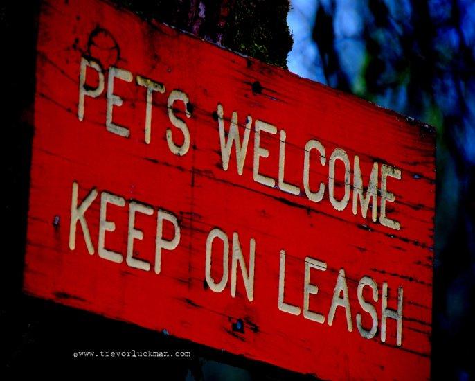 Keep em on a Leash - 8x10 - Original Fine Art Photograph
