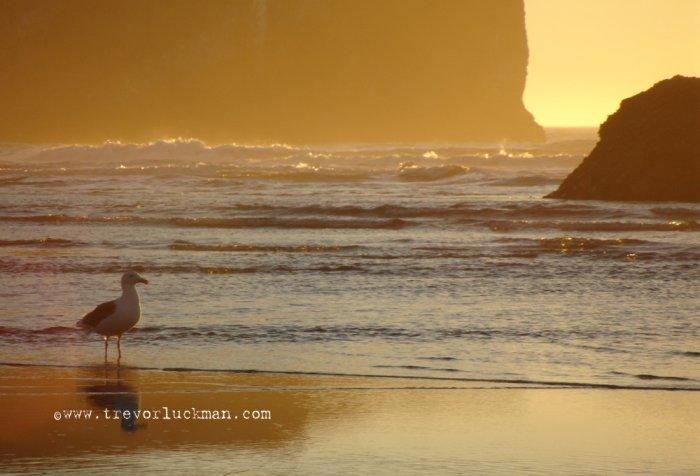 Seagull Sunset - 4x6 - Original Fine Art Photograph