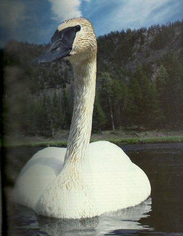 National Wildlife Oct/Nov 1991