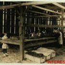 New Studio Quality Antique RP Photo: Girl Workers, Hawthorn Farm, Ages 8, 9 & 10